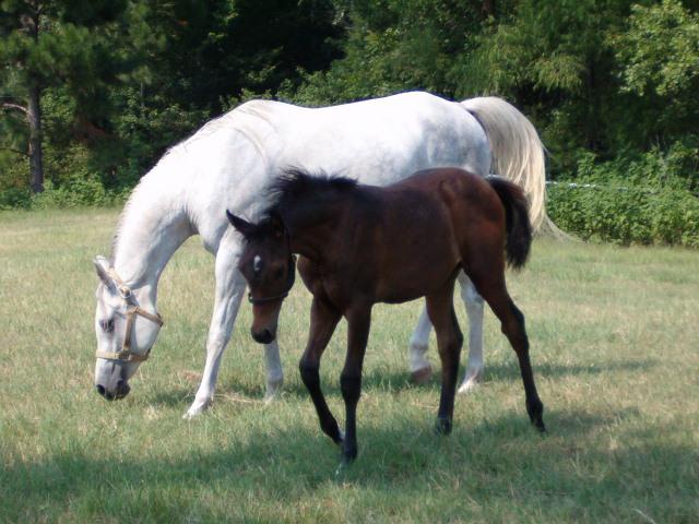 Tootle Lou & Eksstaza Barn & Misc July 05 075